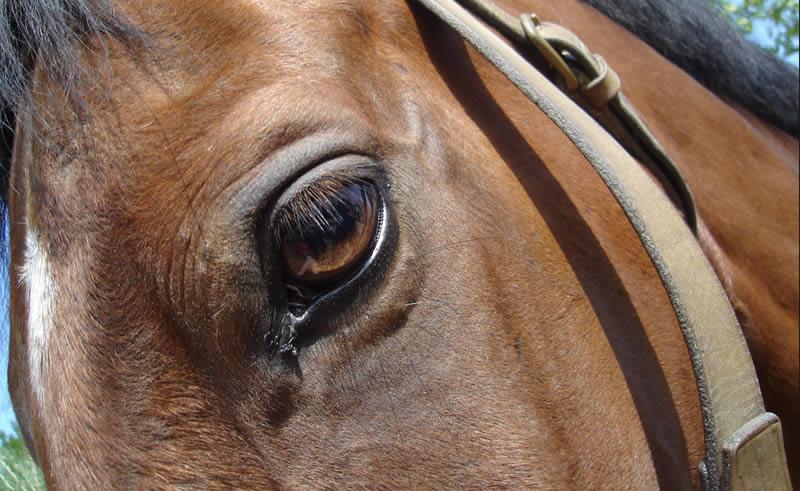 img_curitiba_cavalos1