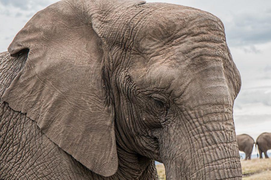 img_elefantes_01