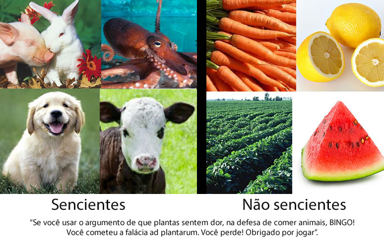 img_plantas_1